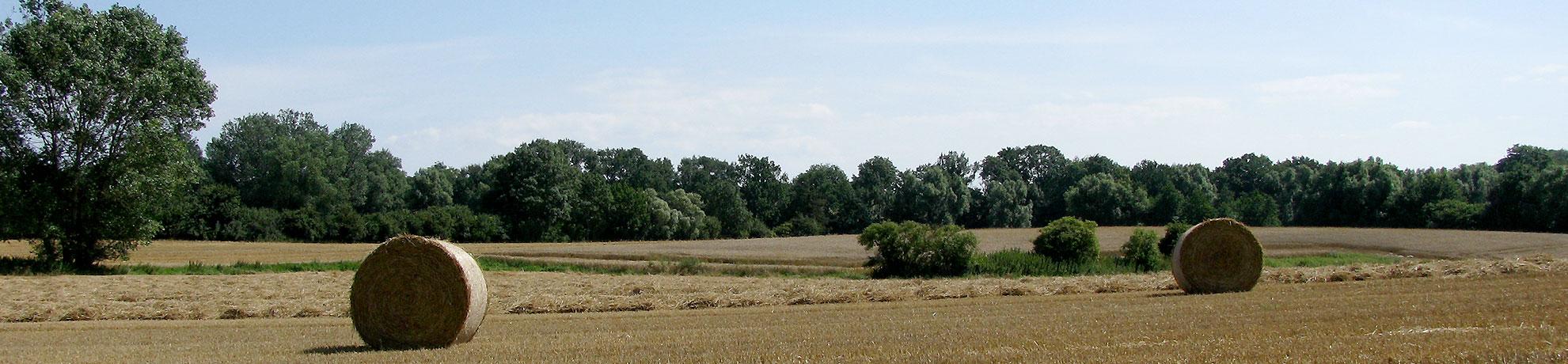 Für Den Garten Und Landschaftsbau Im Kreis Herzogtum Lauenburg